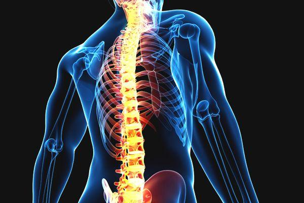 X-Ray снимка на човешки гръбнак | Lejanki.bg