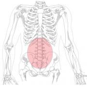 Поява болки в гърба и кръста